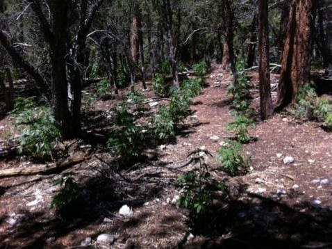 Hiker Finds Outdoor Grow in Clark County, NV