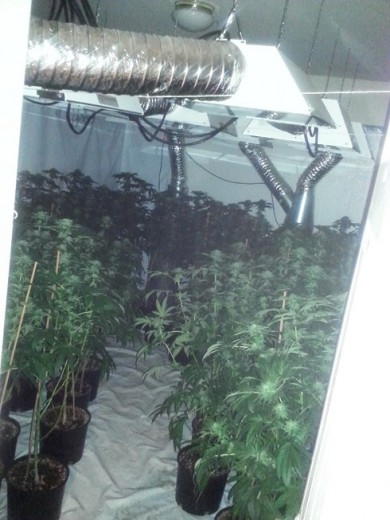 Marijuana Grow House Plants