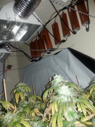 Marijuana Grow Light Ballasts