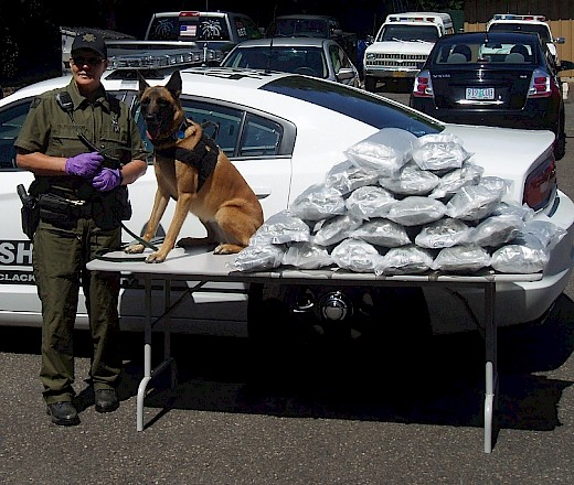 Clackamas County drug K9 with marijuana